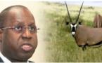 Assemblée nationale / Transfert des gazelles oryx: Le Ministre de l'Environnement Abdou Karim Sall donne des détails