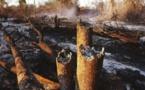 Feux de brousse:  5000 hectares ravagés dans la région de Tambacounda, en 2019