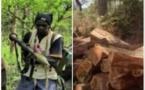 Coupe illicite de bois : Le pire évité de justesse entre agents des Eaux et Forêts et MFDC du camp de Mongone