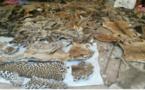 Tambacounda: Les trois trafiquants de faune condamnés