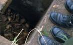 Diender: Une fillette tuée et jetée dans une fosse septique