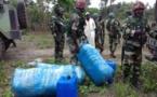 Coup de filet de la gendarmerie à Diouloulou: 237 kg de chanvre Indien saisis, 2  trafiquants interpellés