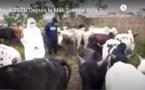 VIDEO/ Magal de Touba 2021: Les bœufs de Sokhna Aïda Diallo, acheminés dans la ville sainte