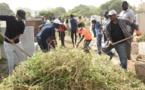 Désherbage du cimetière Saint Lazare: Barthélemy Dias au cœur de l'action (images)