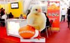 SEDIMA Group victime de contrefaçons sur son produit aliment de volaille