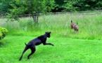 Cette jeune biche s'était approchée trop près de leur maison. La réaction de leur chien va vous étonner !