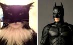 16 chats qui ressemblent étrangement à d'autres choses ! Bluffant...