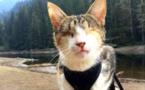 Cette chatte aveugle a une passion très inhabituelle et ses maîtres se sont pris au jeu ! C'est surprenant...