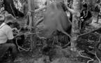Voilà pourquoi vous ne devez plus JAMAIS monter à dos d'éléphant. Ce qu'ils leur font est complètement ignoble !