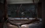 Ce photographe a capturé les conditions de vie abominables des animaux dans les zoos chinois ! Ça fait vraiment mal au cœur...