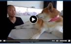 Un chien dressé pour ne pas aimer son maître