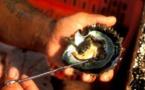 Elle trouve deux perles dans ses huîtres de Noël