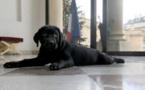 Top 6 des chiens de chefs d'état, c'est qui le beau toutou à son papa ?