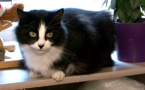 Ce chat a traversé toute la France en parcourant 1200 km pour finalement retrouver ses maîtres après un an et demi ! Une incroyable épopée pour une si petite boule de poils... Il y a 24 jours