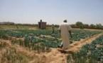 Vidéo/ Plaidoyer d'un maraîcher : «Les terres sont fertiles, les voleurs méritent la prison à vie !». Regardez