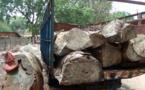 Voici les camions des traficants gambiens saisis par les agents des eaux et forêts de Bignona