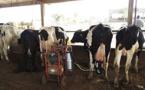 A quand l'autosuffisance en lait au Sénégal ? - Par Pr Demba Sow
