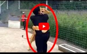 Un lion retrouve son maître après 7 ans. Regardez, vous allez être choqué !