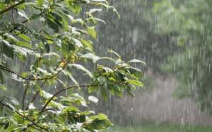 (Vidéo) Ziguinchor - Une fine pluie s'abat sur la ville... Regardez !