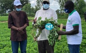 Macky Sall rend visites aux populations de Nioro du Rip ..