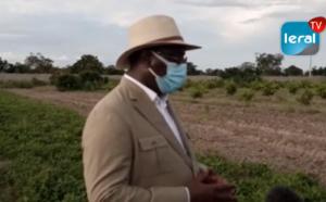 VIDEO / Dans son propre périmètre agricole: Macky Sall invite à developper une agriculture moderne
