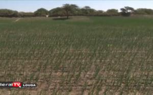 Maodo Kâ: La révolution de l'agriculture avec le goutte-à-goutte et le solaire