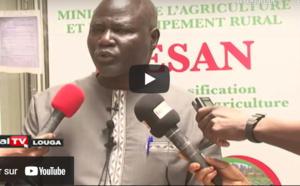 Insuffisance alimentaire: Le projet d'intensification éco-soutenable de l'agriculture dans les Niayes, lancé à Louga
