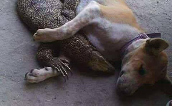 Même les animaux ont compris qu'on peut s'aimer amicalement malgré nos différences. Vraiment la race humaine est en retard