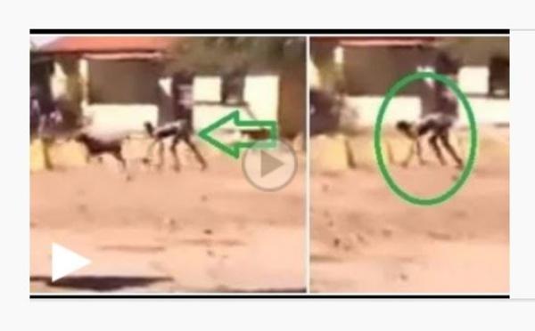 Vidéo: un être mi-humain, mi-chien repéré dans une localité du pays – Regardez !
