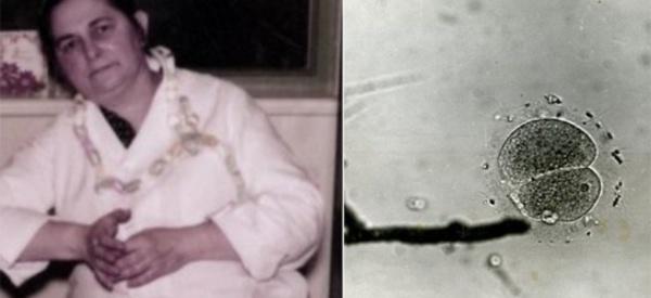 Miriam Menkin, la scientifique oubliée qui a changé la fertilité