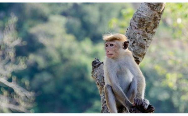 Scène hallucinante : Un singe sur sa mini-moto a essayé d'enlever un enfant ! (vidéo)