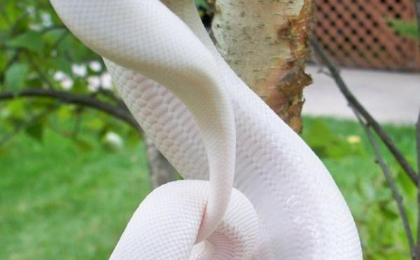 29 animaux albinos qui vont vous faire craquer