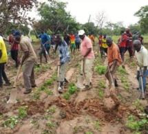 """Bignona : Le président Mamina Kamara et Mamadou Lamine Keïta deviennent des """"cultivateurs"""""""