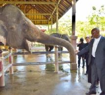 Photos: visite d'étude et travail de Serigne Mbaye Thiam en Thailande, à l'invitation de l'Agence thaïlandaise de Coopération internationale
