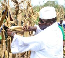 ( 04 Photos ) Et si Yahya Jammeh et son épouse Zeineb Jammeh retournaient aux champs? Voilà ce que ça donne