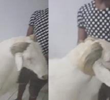 """(Vidéo)  Wally Seck présente son mouton """"Laadoum"""" pour la Tabaski !"""