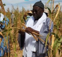 PHOTOS - SAMUEL SARR en plein travail dans les champs de son marabout