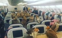 Un prince saoudien paie des billets d'avion à ses faucons