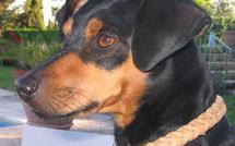 Insolite Un chien survit après avoir été traîné sur 25 km
