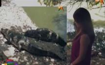 Vidéo – Soumboulou Bathily a peur des crocodiles de la Gambie… Regardez !