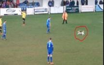 Angleterre: un chien interrompt un match de football pendant plusieurs minutes (VIDÉO)