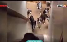 Vidéo - Insolite: Sa ndiogou et les noms des chiens à mourir de rire