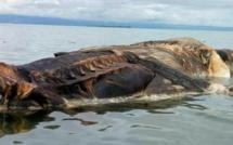 L'immense créature échouée en Indonésie vient d'être identifiée