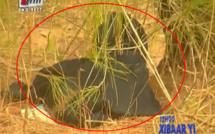 Vidéo – Urgent : Un homme mort retrouvé ligoté derrière le dépotoir de Mbeubeuss ! Regardez.