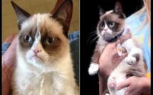 USA/Insolite: Un chat gagne 710 000 $ pour violation de droist d'auteur (Photos)