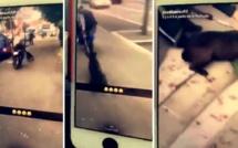 Ils se filment en train de traîner un chien en scooter, la police mobilisée