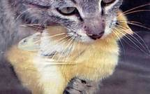 VIDEO : Le chat, la scie, les jeunes sénégalais et la mort (Insolite)