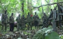 Urgent- Attaque armée en Casamance: Un enfant de 6 ans tué, une dame gravement blessée