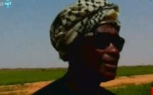Matam: la riziculture menacé par des oiseaux, les cultivateurs crient à la l'aide