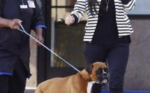 Kim Kardashian dépense 10 000 dollars pour ajouter des... faux testicules à son chien